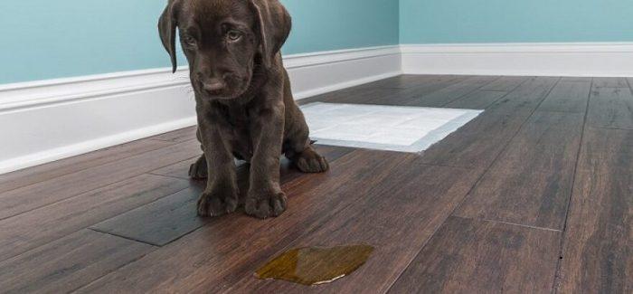 چگونه به سگ آموزش دهیم کجا دستشویی کند