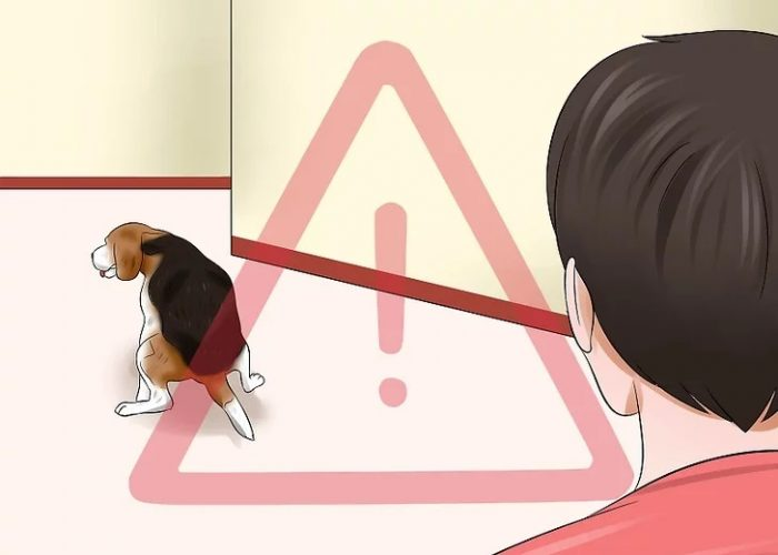 مراقبت و نظاره گر سگ در همه اوقات