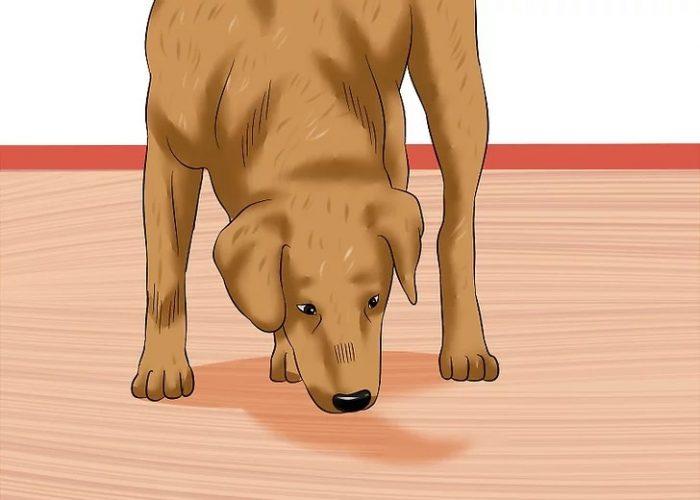 یادگیری و توجه به نشانه های سگ