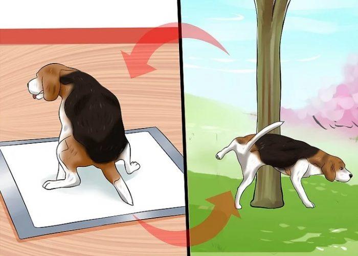 شناساندن نقاط دستشویی داخلی و خارجی را به سگ