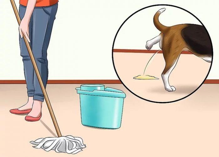 بلافاصله محل دستشویی تصادفی را پاک کنید.