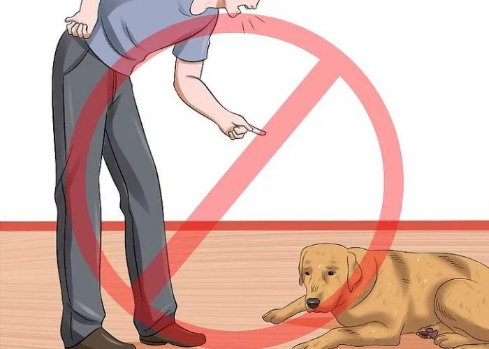 سگ خود را به دلیل دستشویی اتفاقی تنبیه نکنید.