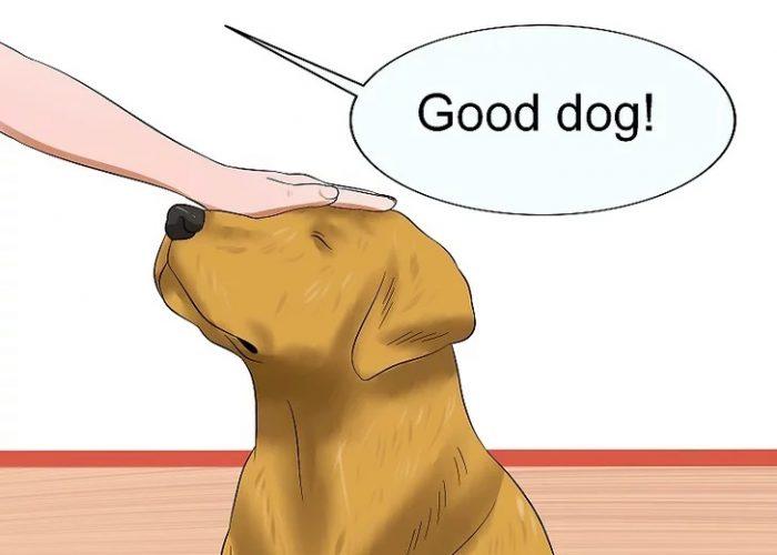 از سگ خود خیلی تعریف کنید.