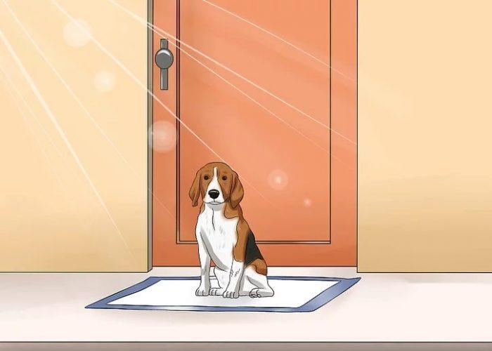 با حرکت زیرانداز بهداشتی ، حرکت توله سگ را به سمت در هدایت کنید.
