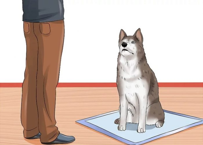 آموزش دستشوی به سگ